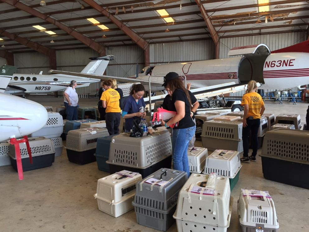 Approximately 100 Dogs Airlifted Out Of Texas Amid Harvey