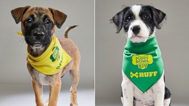 Puppies rescued after hurricane to star in Puppy Bowl