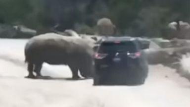 Video shows rhinoceros ramming car in Mexican safari park