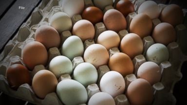 14 fall sick in salmonella outbreak possibly linked to large, cage-free eggs