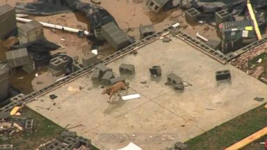 Dog searches debris for owner after tornado razes Tennessee house