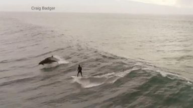 California man surfs with dolphins