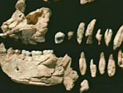 'Ardi:' Fossil Discovery Is Oldest Human Ancestor - ABC News