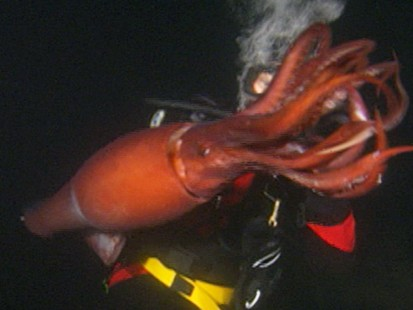 giant octopus attacks man - photo #15